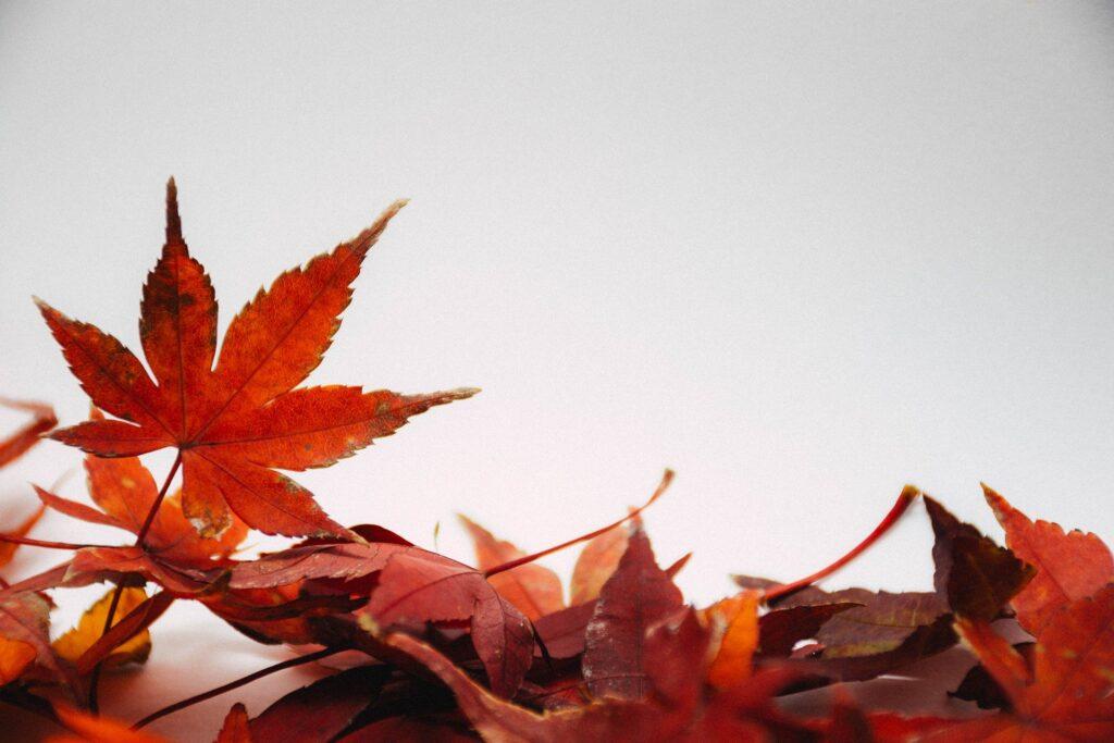 Papel de Parede Outono